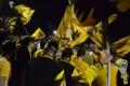 20171020 - 011 - SC Borussia Lindenthal-Hohenlind